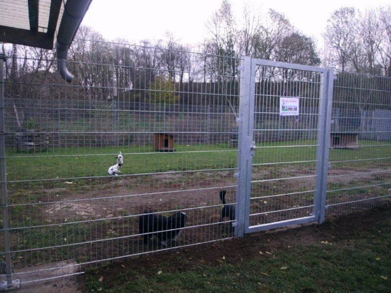 hundeauslauf_tierheimderenburg2
