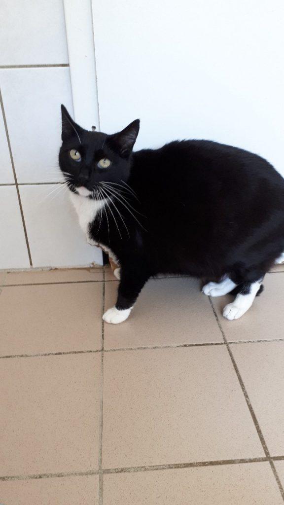 Söckchen Katze 1
