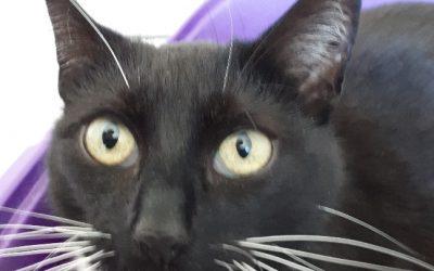 """Katze """"Söckchen"""""""