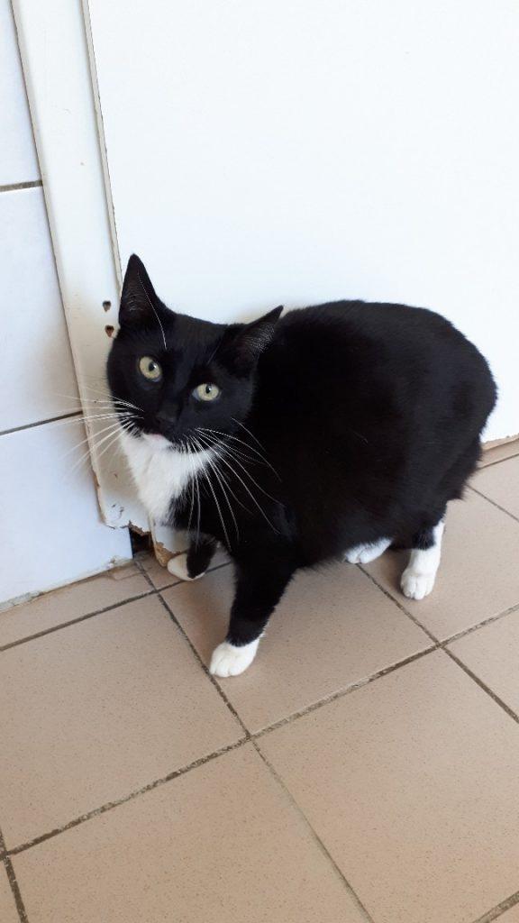 Söckchen Katze 3