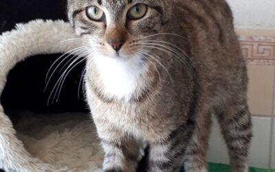 """Katze """"Pixi"""""""