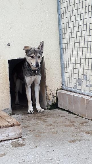 Wolf Finn 2