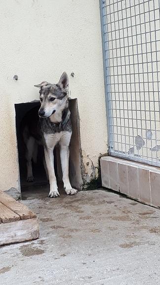 Wolf Finn 3