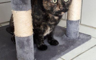 """Katze """"Cleo"""""""