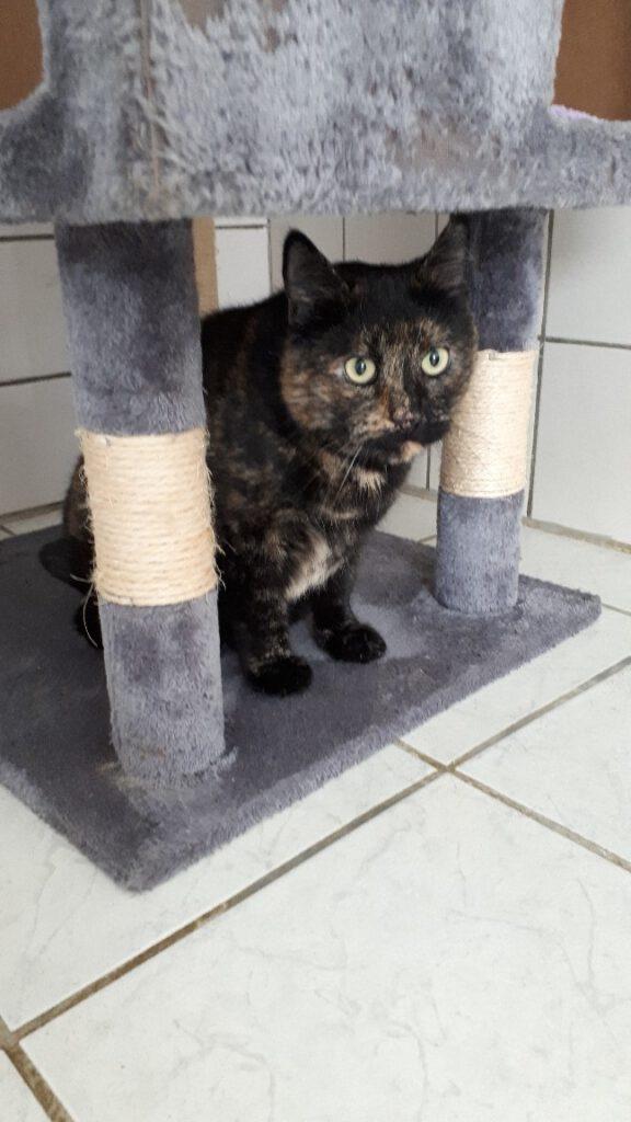 Katze Cleo 1