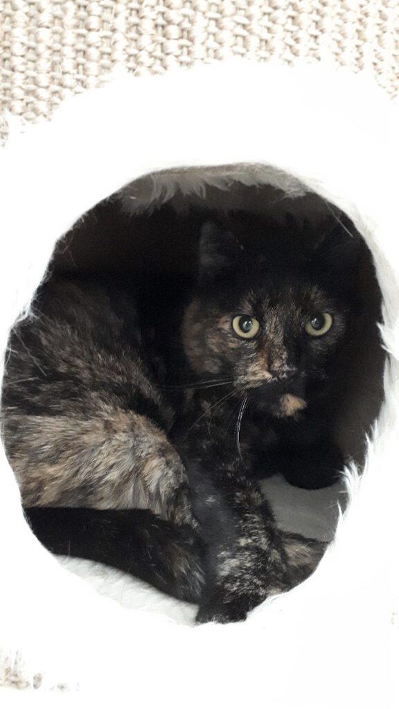 Katze Cleo 2