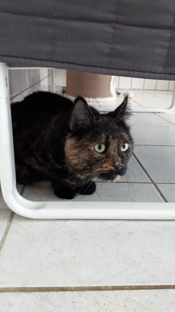 Katze Cleo 3