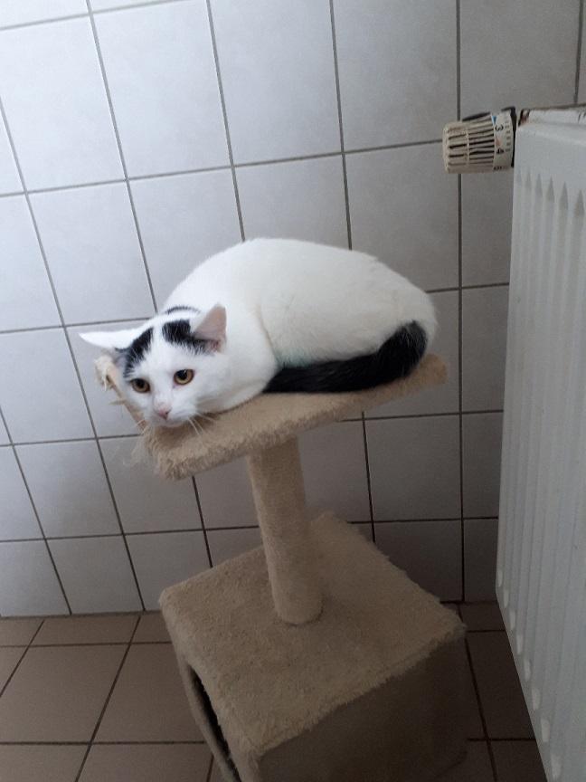 Katze q2 1