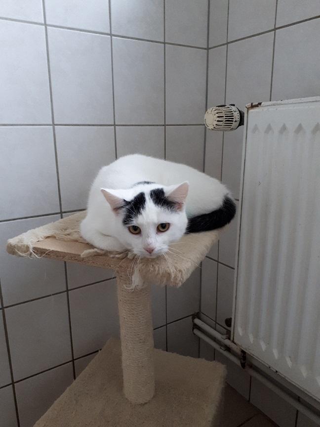 Katze q2 2
